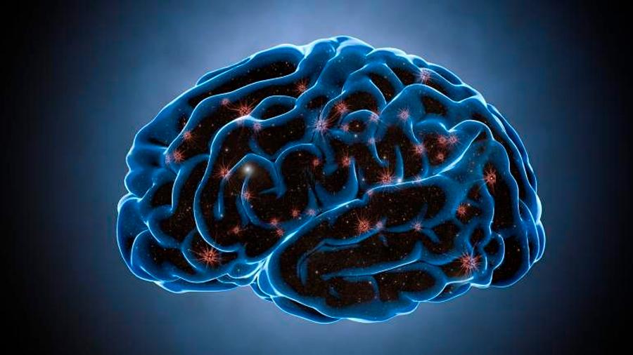Científico advierte que si el cerebro generase nuevas neuronas, se perderían otros recuerdos en el proceso