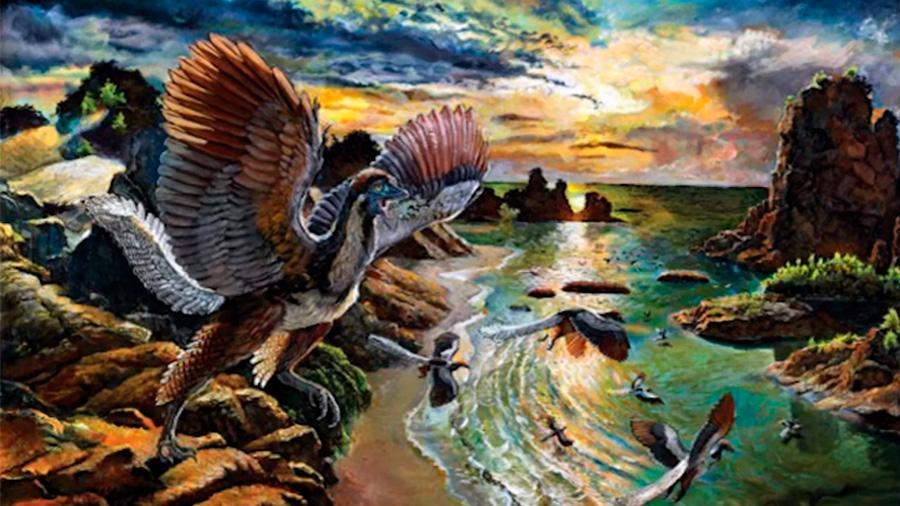 Descubren nueva especie de Archaeopteryx, eslabon perdido entre dinosaurios y pájaros y más cercana a las aves modernas