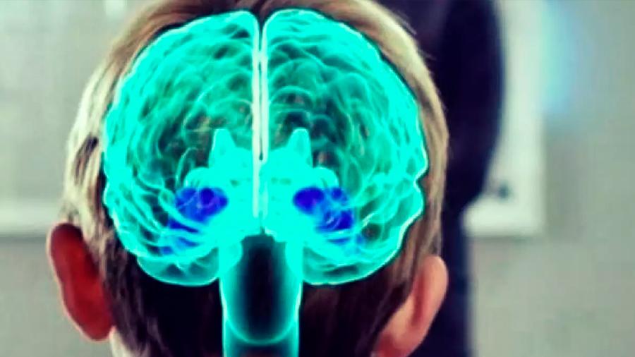 Descubren cómo el cerebro decide qué aprender