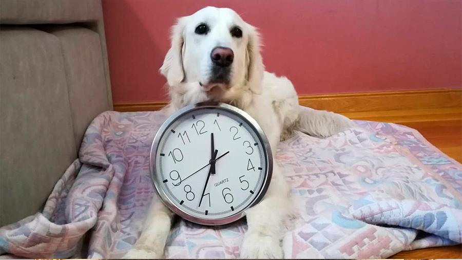Estudio: los perros saben exactamente qué hora es