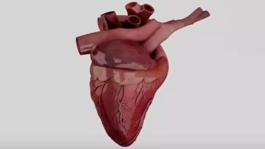 El primer modelamiento matemático de un corazón virtual es chileno