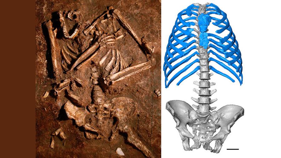 Reconstruyen por primera vez en 3D el tórax de un neandertal