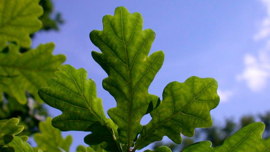 Un tercio de las plantas no son preservables en bancos de semillas