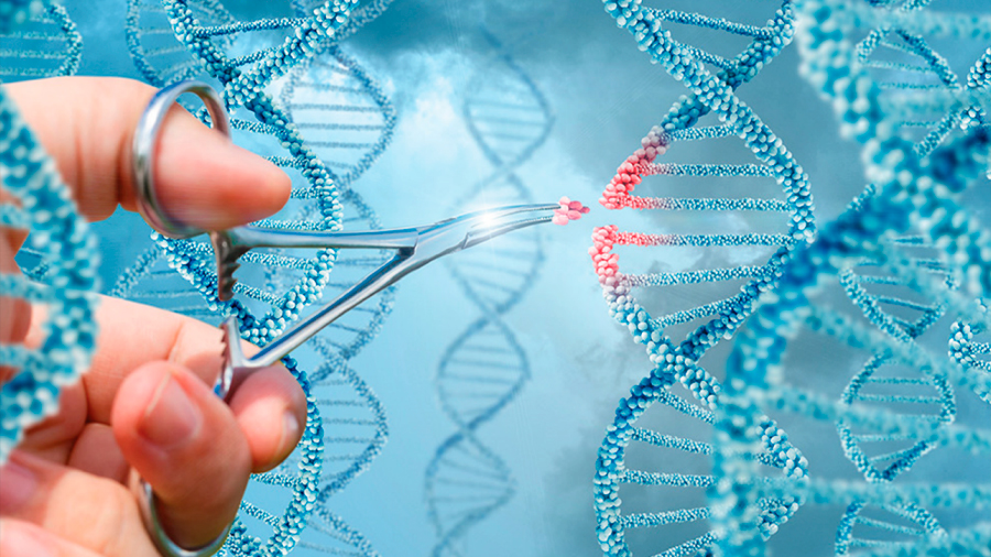 La carrera por liderar el revolucionario y lucrativo mercado de edición genética en humanos