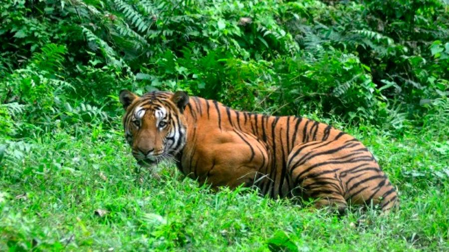 """Fue """"a sangre fría"""": En medio de críticas, India logró abatir a la llamada """"tigresa asesina"""""""