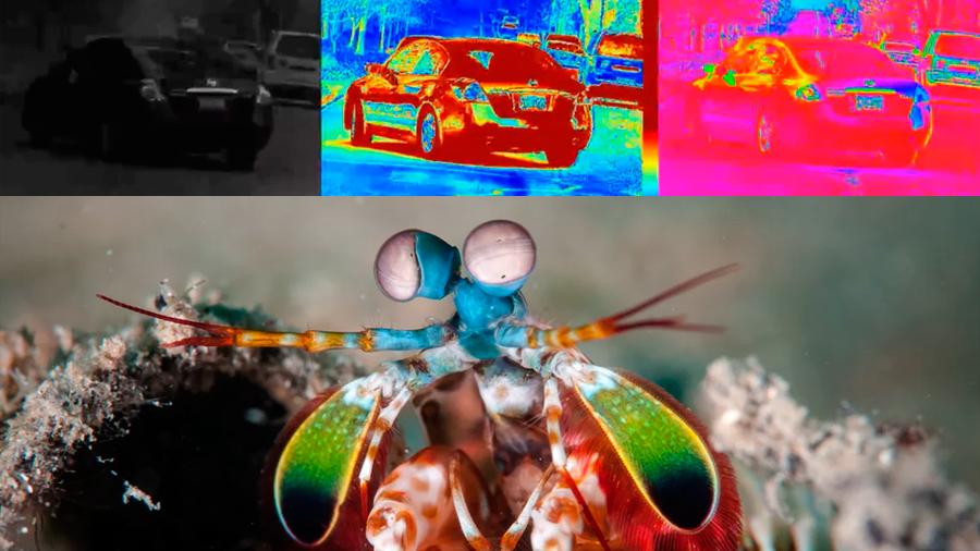 Cámara para coches autoconducidos se inspirada en los ojos del camarón mantis