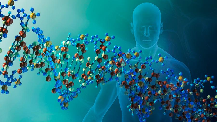 Desvelado el origen de la misteriosa periodicidad del genoma