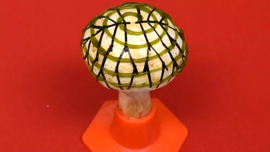 Champiñones biónicos fusionan nanotecnología, bacterias y hongos