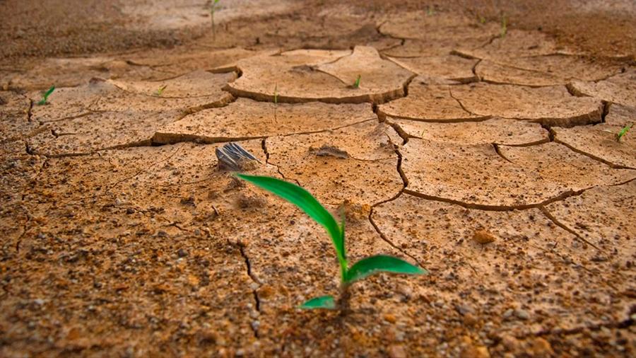 Descubren cómo hacer plantas resistentes a sequías sin distorsionar su crecimiento