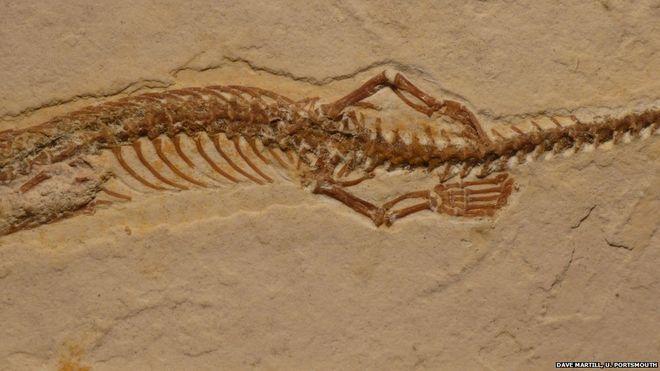 Descubren fósil de una serpiente prehistórica con cuatro patas