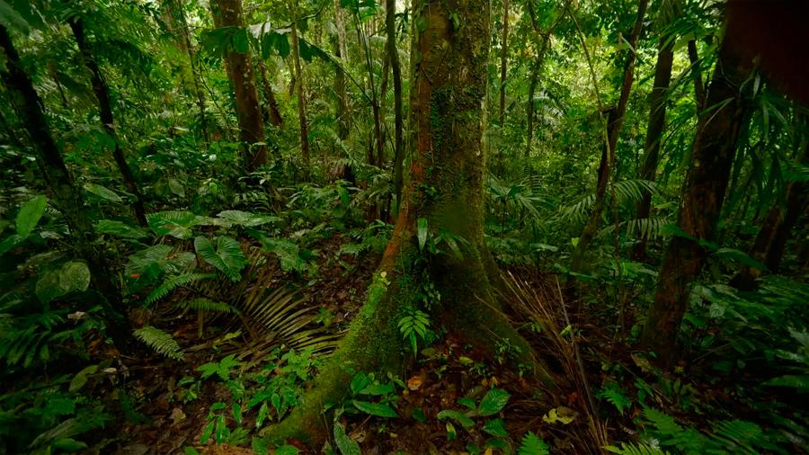 Los bosques amazónicos no logran adaptarse al veloz cambio climático