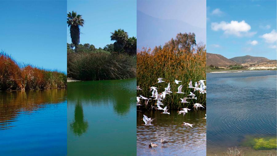 Recobrar espacios naturales importa para mitigar el calentamiento global