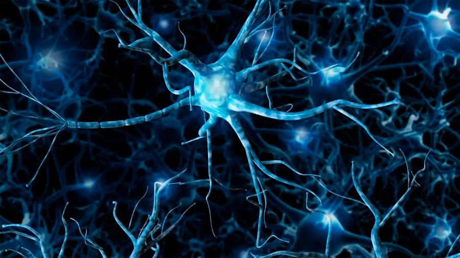 Logran reproducir in vitro funciones cerebrales complejas