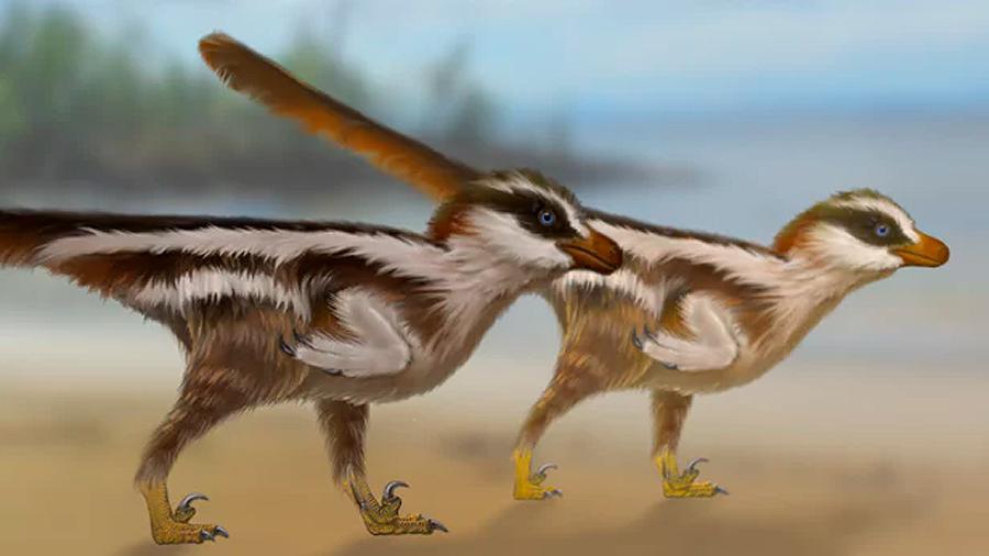 Hallan las huellas de dinosaurio más pequeñas del mundo