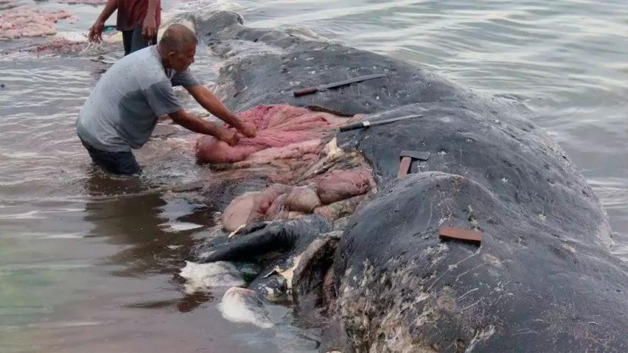 Impresionante imagen de un cachalote encontrado muerto con 115 vasos de plástico en el estómago