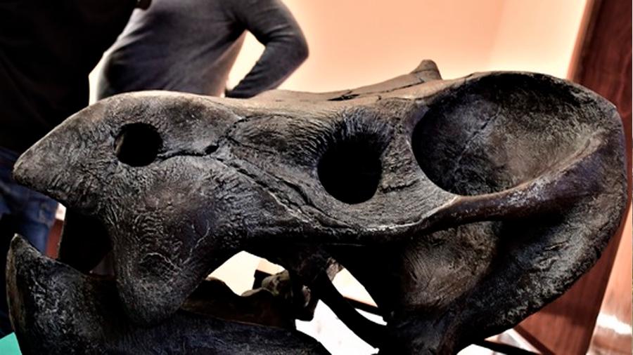 Descubren científicos restos de herbívoro gigante con rasgos reptilianos