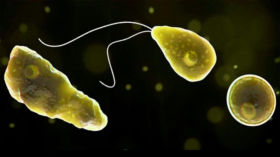 Nanopartículas, la nueva arma médica contra la ameba 'comecerebros'