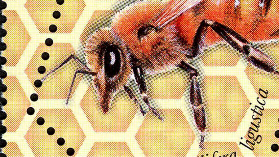 Descubierta por primera vez una abeja hembra con dos padres y sin una madre