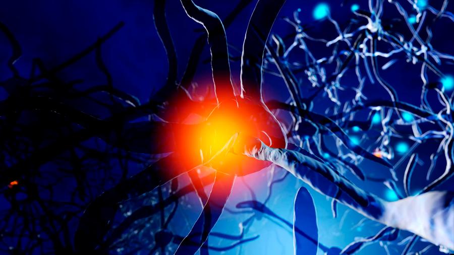 Biólogos descubren un distintivo inusual del envejecimiento en las neuronas