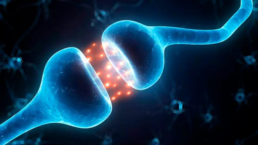 Una misma neurona crea y borra los recuerdos