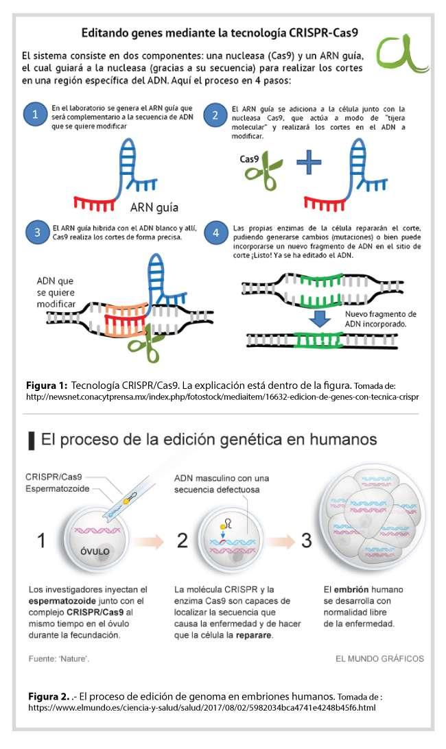 La necesidad de congruencia entre la ciencia y la ética: La edición genética