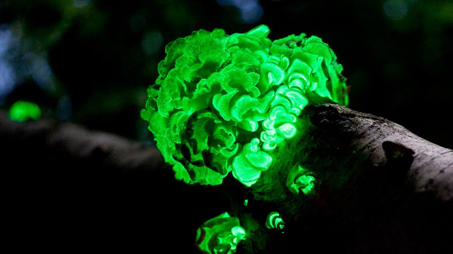 Científicos descubren un conjunto de enzimas para crear organismos brillantes
