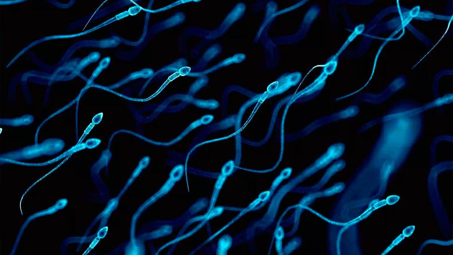 Harvard probará CRISPR en el esperma para prevenir el alzhéimer