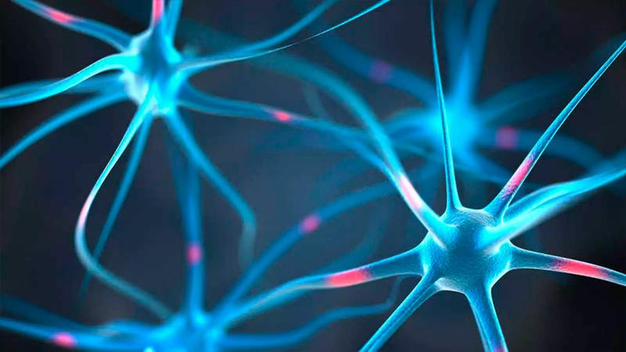 Investigadores de Chile descubren que el manejo de la glucosa detiene el progreso del Alzheimer