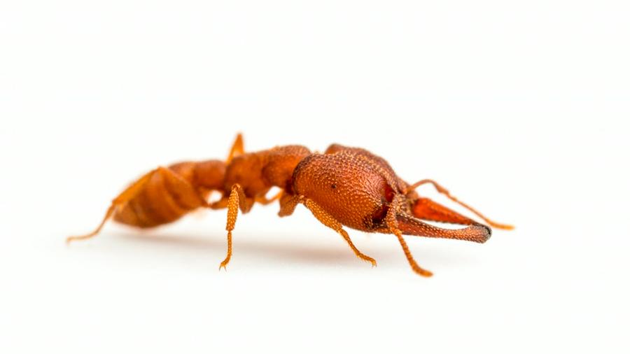 Picadura de una hormiga es 5,000 veces más rápida que un parpadeo humano