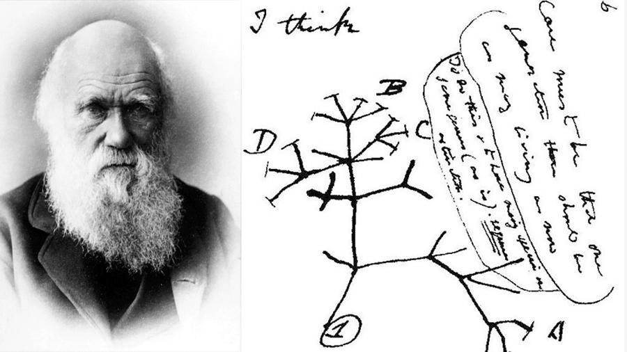 La clave para cumplir una predicción de Darwin está en los fósiles
