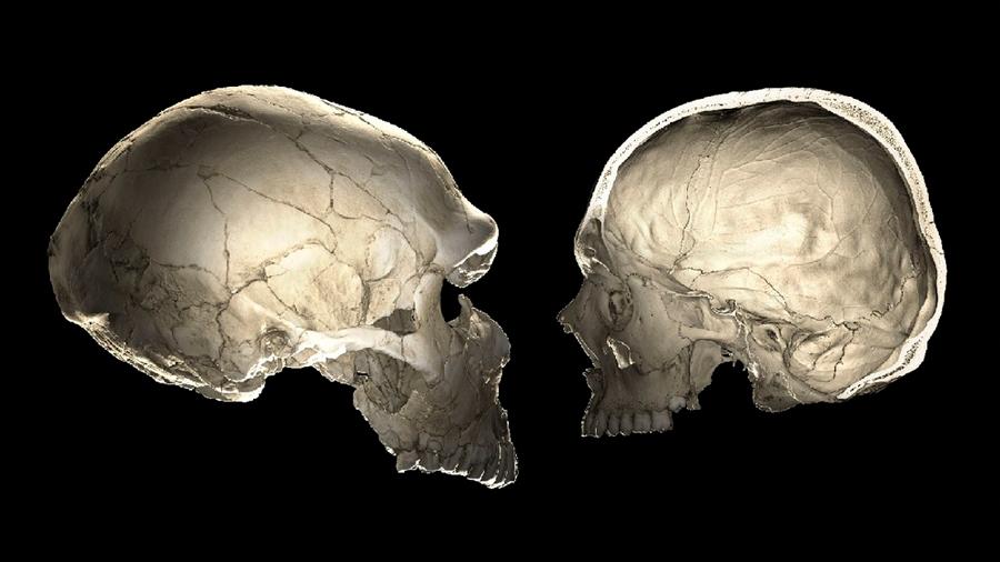 La forma de tu cráneo podría revelar que tan neandertal eres en tus genes