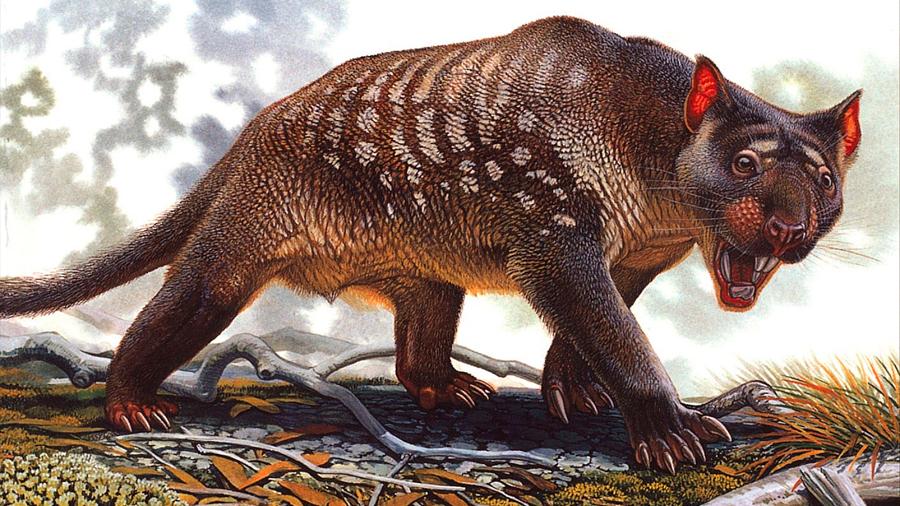 El león marsupial gigante fue diferente a cualquier animal vivo