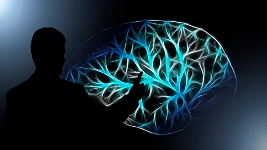 Nueva tecnología permite observar la actividad cerebral vía el agua que rodea a las neuronas