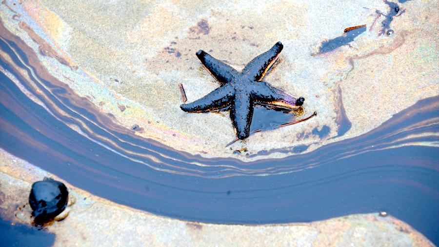 Crean membrana capaz de limpiar derrames de petróleo y aprovechar el combustible