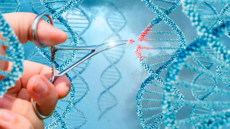 Se descifra el código de las 'tijeras' para editar el genoma humano