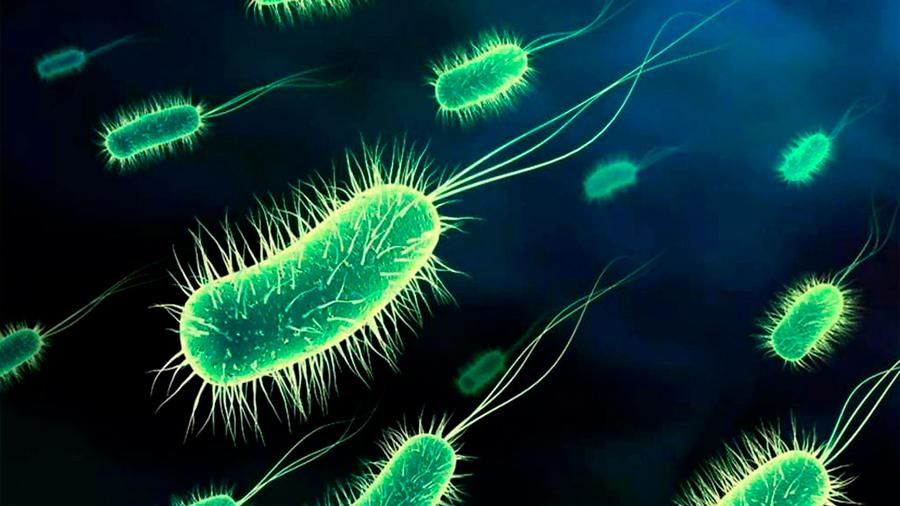 Hallazgo internacional de científica mexicana en el desarrollo de vacuna contra Escherichia coli patógena en humanos
