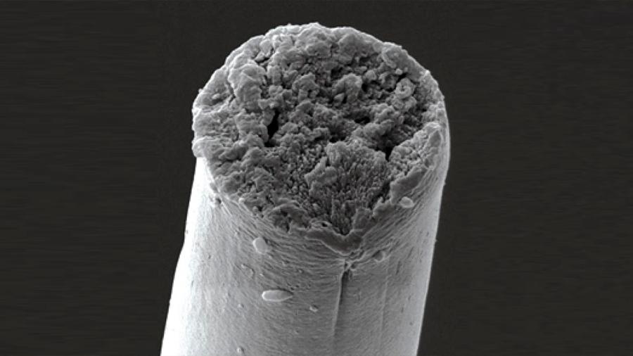 Trasplantan segmentos del ADN arácnido a bacterias y gusanos a fin de crear el hilo de seda de las telarañas