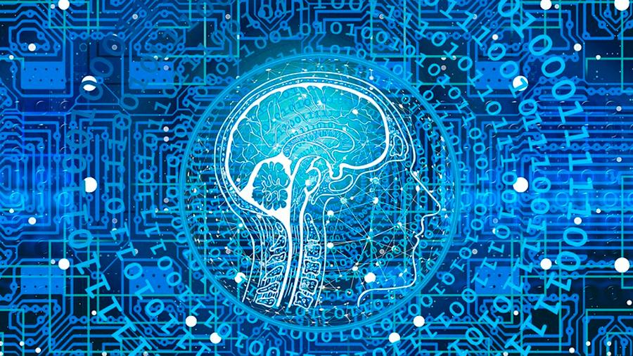 Descifrado el código cerebral que interpreta los sentidos