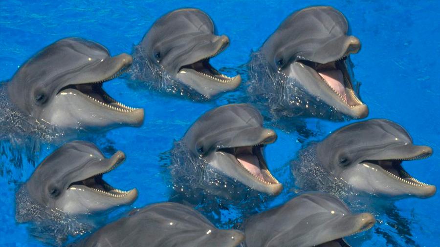 Con el fin de evitar encontrarse, grupos de delfines establecen horarios para usar el mar