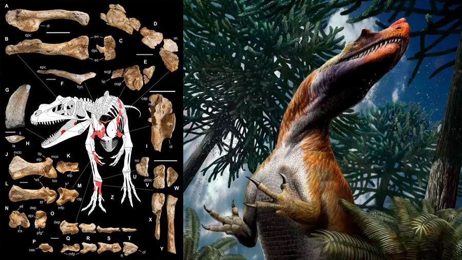 Descubren en Alpes italianos al dinosaurio depredador más antiguo que vivió hace 198 millones de años