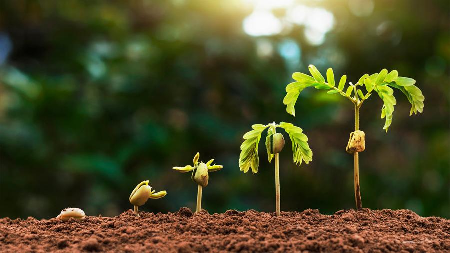Un material inteligente de construcción crece como las plantas y repara sus propias grietas