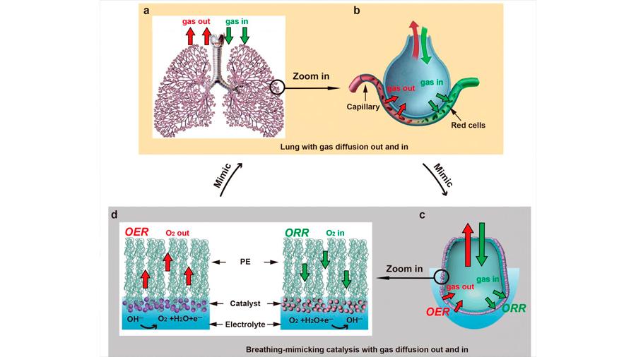 Un diseño inspirado en los pulmones convierte el agua en combustible