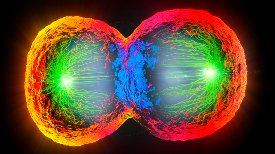 El seguimiento del desarrollo célula a célula, avance del año, según 'Science'