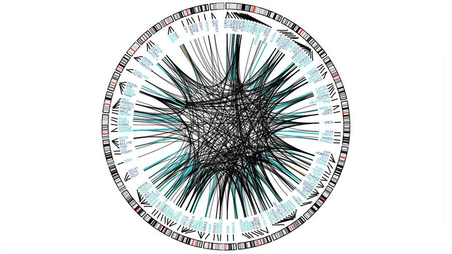 Cartografiado el panorama genético del cerebro