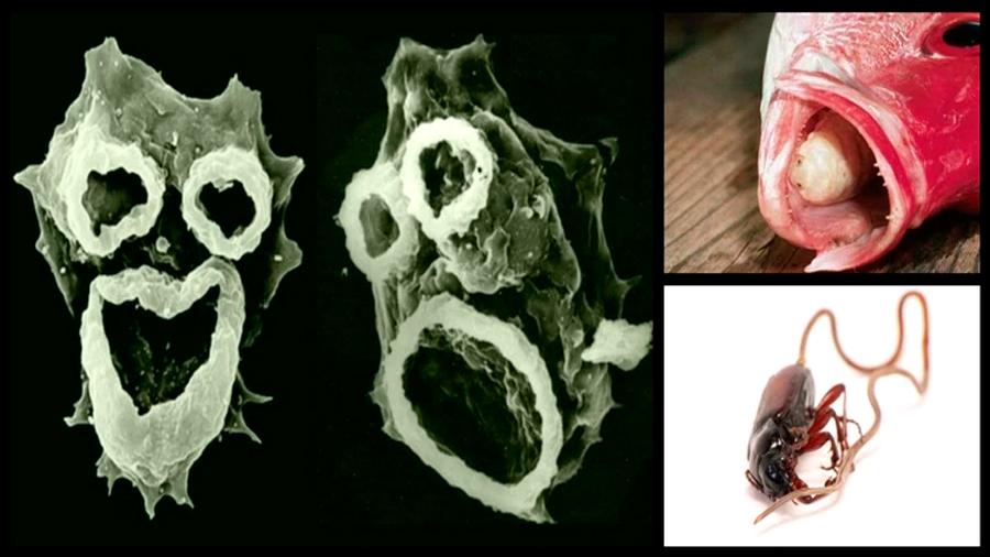 Echa un vistazo a los organismos más tenebrosos del planeta