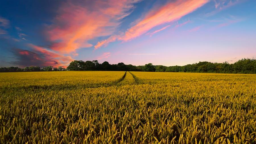 Los cultivos orgánicos también son más contaminantes que los convencionales