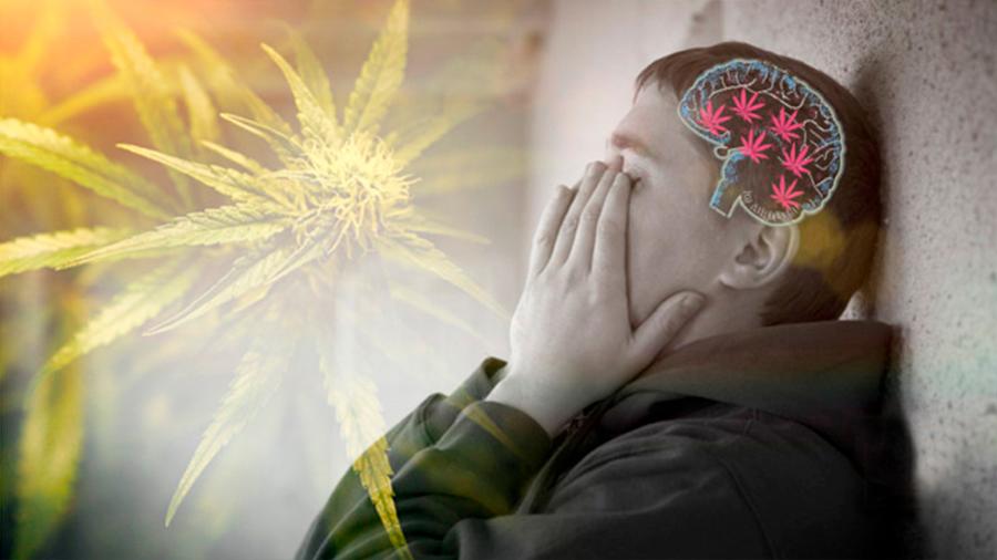 Cannabis y estrés en la adolescencia favorecen los trastornos de ansiedad en la edad adulta