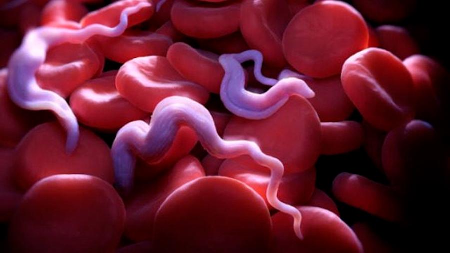 Descubren que el parásito de la enfermedad del sueño utiliza múltiples vías metabólicas
