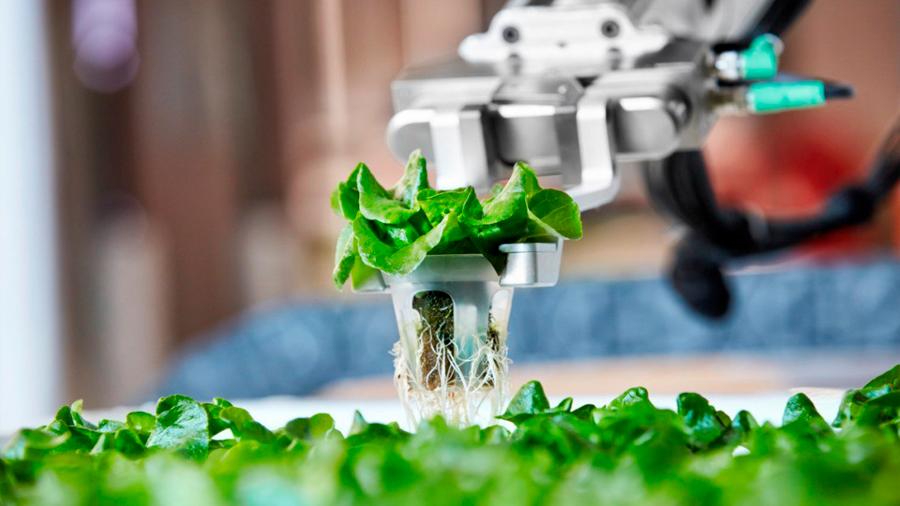 Crean granja autónoma que produce más alimento y prescinde de trabajadores humanos