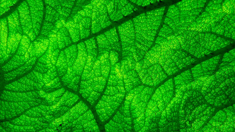 """Vía síntesis """"verde"""", científicos argentinos obtienen nanopartículas de plana que inhiben patógenos microbianos"""